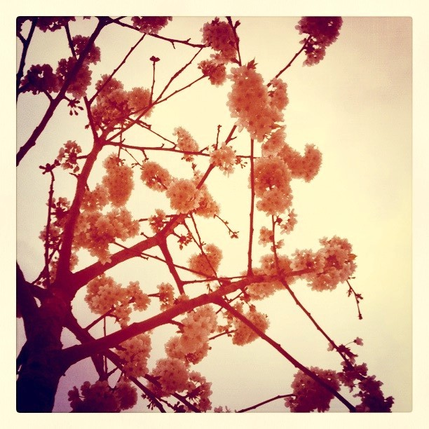 ¿Necesitas ideas para tu escaparate de primavera?